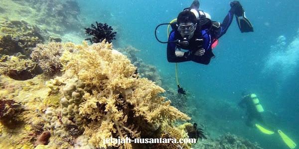 diving pulau semak daun