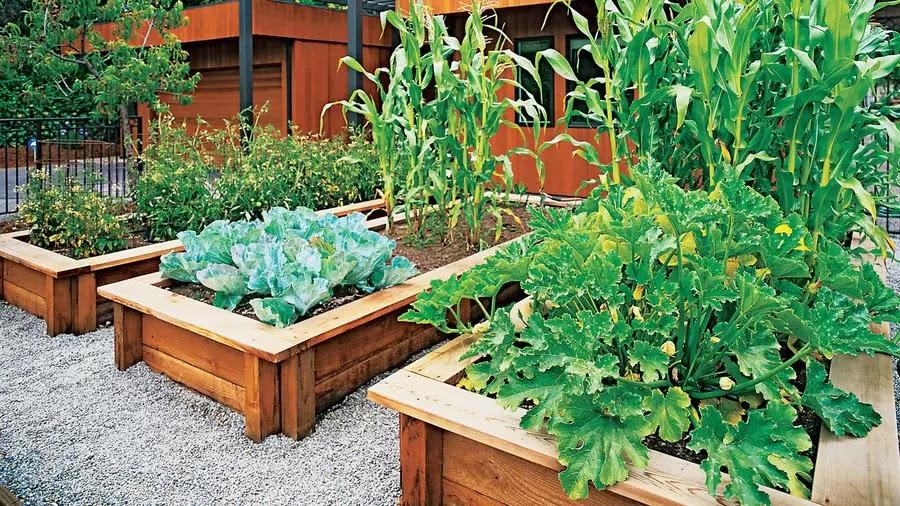Dicas básicas de jardinagem de alimentos em casa antes do colapso de alimentos