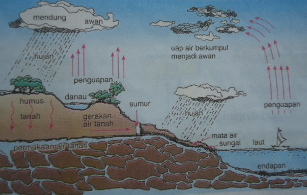 Tahapan Daur Air dan Kegiatan Manusia yang Dapat Mempengaruhinya