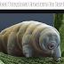 300 डिग्री तापमान पर भी जिंदा रह सकता है ये जीव – Most Toughest Creature On Earth