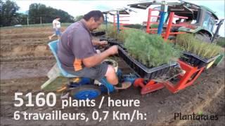 Machine de plantation de l'asperge en motte