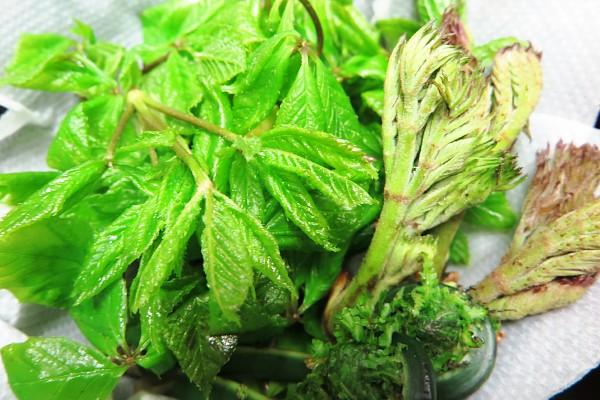 山菜 湯の華市場