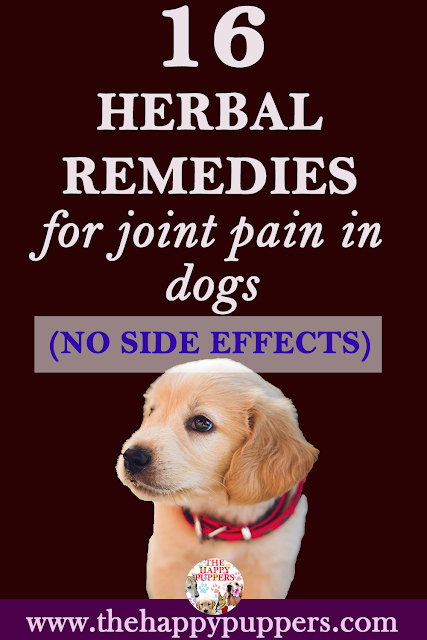 16 herbal remedies for joint pain in dogs