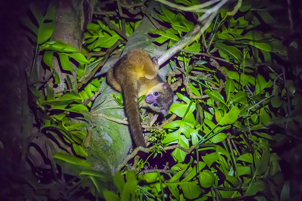 Ночная прогулка в Монтеверде, животные Коста-Рики
