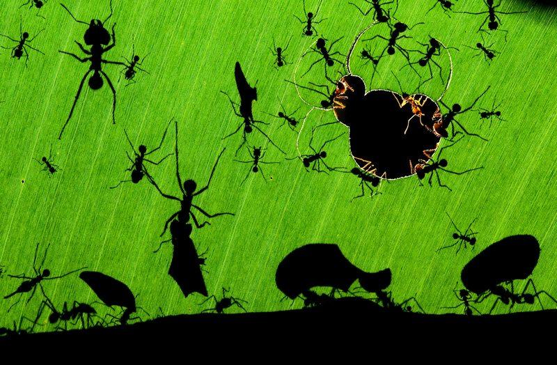 método casero para deshacerse de las hormigas