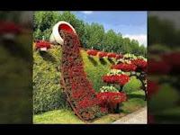 images%2B%25286%2529 صور ورد طبيعي ,أجمل وأفضل اشكال الورد الطبيعي بالصور