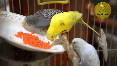 أغذية مفيدة لطيور الزينة في الشتاء