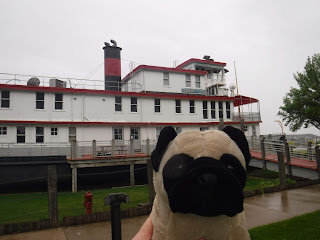 a plush pug appears in front of a white steamboat with red trim that is in drydock and has sidewalk and a gangplank  leading to it.