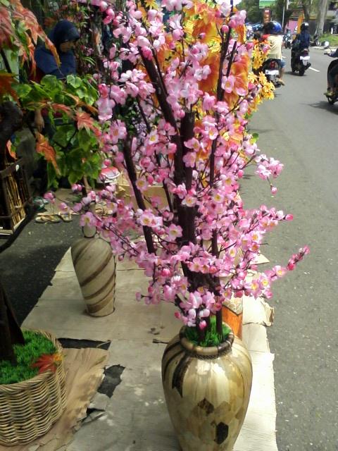 Pecinta Bunga Hias Dan Dekorasi Ruangan Rumah Serta Kantor Aneka Pohon Daun N
