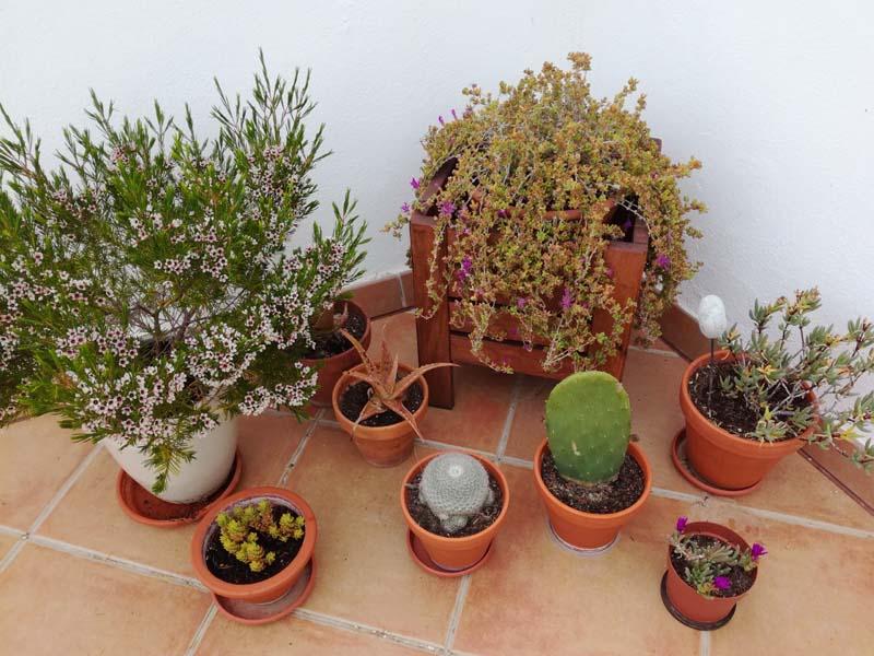 Angolo con piante