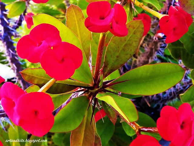 Existem flores que, por vezes, até perfumam as mãos de quem as esmaga... Outras haverá... que não se deixam esmagar... / There are flowers, that even perfume the hands that crush them... However, other flowers... will not let themselves to be crushed...