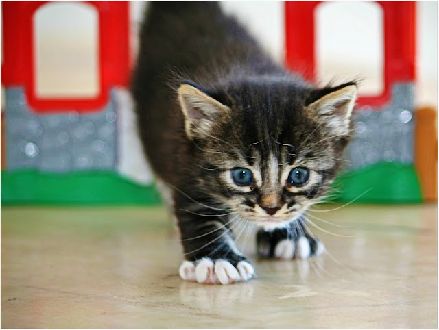 Little kitty ♥ =^..^= ♥ by Viola's visions from flickr (CC-NC-SA)