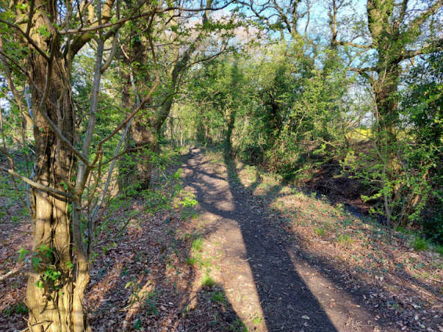 Shadows of trees on the leafy ground along a woodland footpath