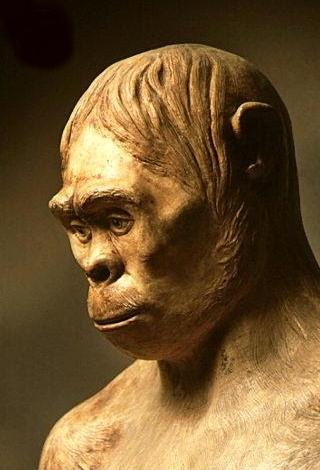 pithecanthrophus erectus, pitecantrophus erectus, pithecantrophus erectus