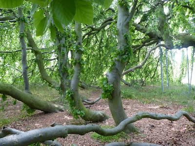 Kew Gardens chênes typiquement anglais