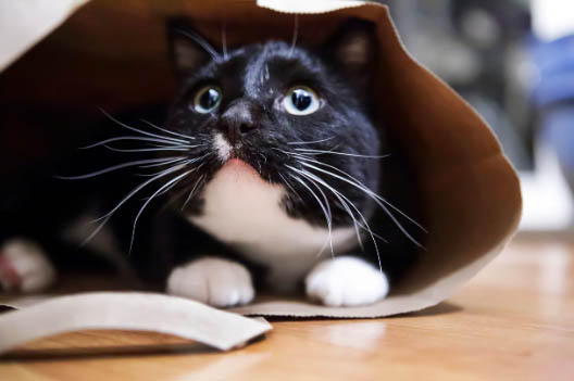 Co robić, gdy kot boi się burzy?