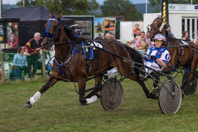 Harness Racing: The Shows