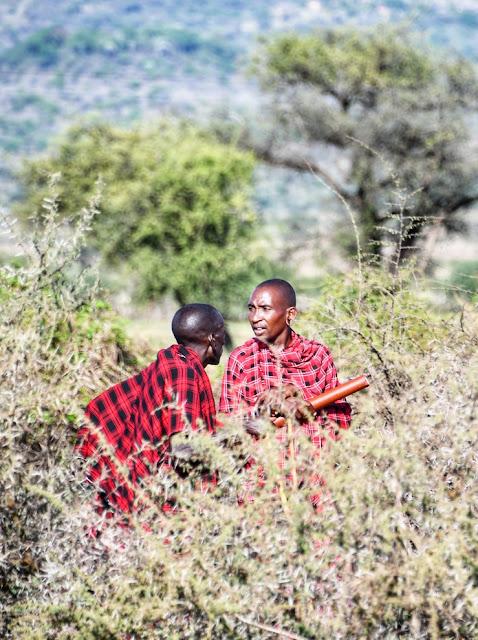 Safari na Tanzânia e no Quênia
