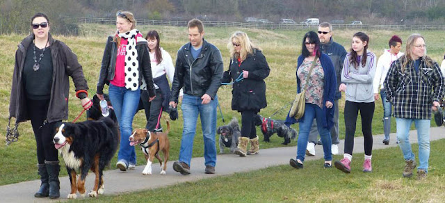 Dogs being walked around Ferry Meadows