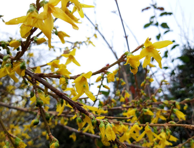 Image shows yellow flowers against a grey sky