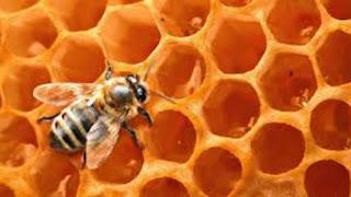 Στη Γερμανία υπάρχει κίνημα για την προστασία της μέλισσας