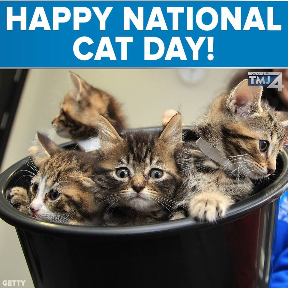 National Cat Day Wishes Unique Image