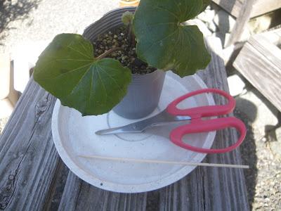 ハサミ 竹串