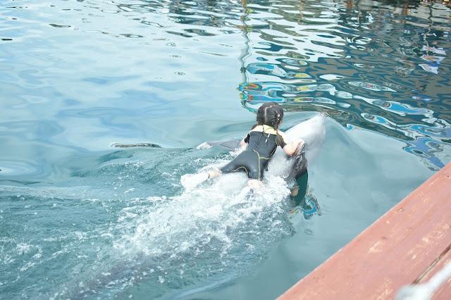 イルカと泳ごう