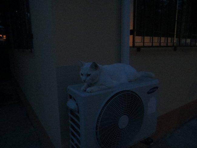 Белый кот лежит на улице