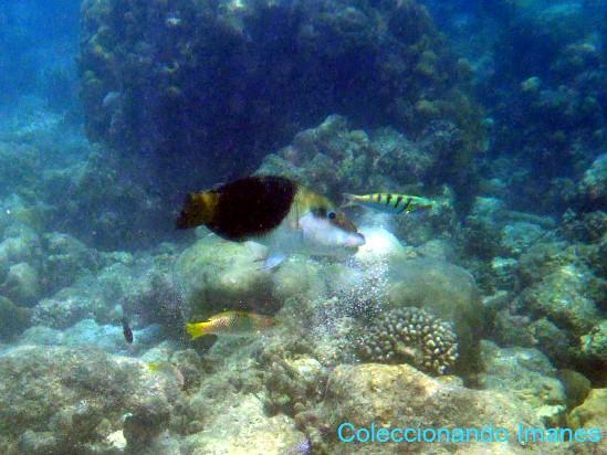 pez mitad blanco y mitad negro, tamarín verde