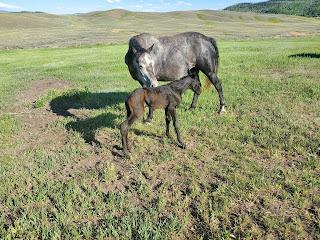 just born foal