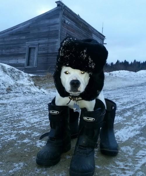 Cachorro de 'Botas'