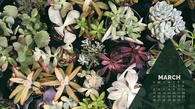 Desktop Wallpaper Calendar March 2017 - Succulents