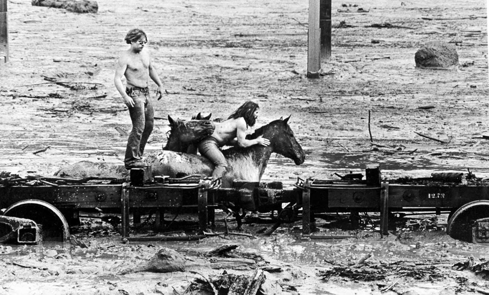 Bob Brown, left, and his brother John attempt to lead three horses to safety out of the Weyerhaeuser 19 Mile camp in Kid Valley, Washington. The yard was flooded by the Toutle River following the eruption of Mount St. Helens.