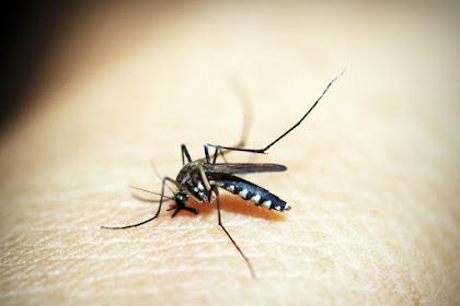 Waspada! Ini Gejala Malaria Pada Anak