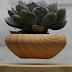 Levitating Plants - Amazing Concept for the Plantitos & Plantitas