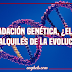 Degradación genética, ¿EL talón de alquiles de la evolución?