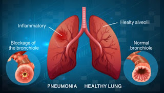odia meaning of lungs