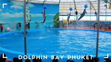 Dolphin Bay Phuket Show Timings, Tickets Price