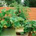 5 Langkah Mudah Menanam Sayuran Di Pot