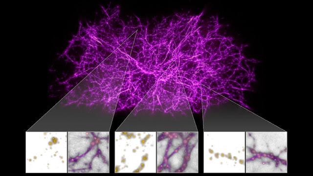 Una primitiva especie de moho ayuda a los astrónomos a mapear las macroestructuras del universo
