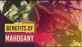 benefits of mahogany