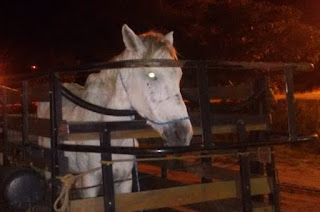 http://vnoticia.com.br/noticia/3756-pm-recupera-cavalo-furtado-em-santa-clara