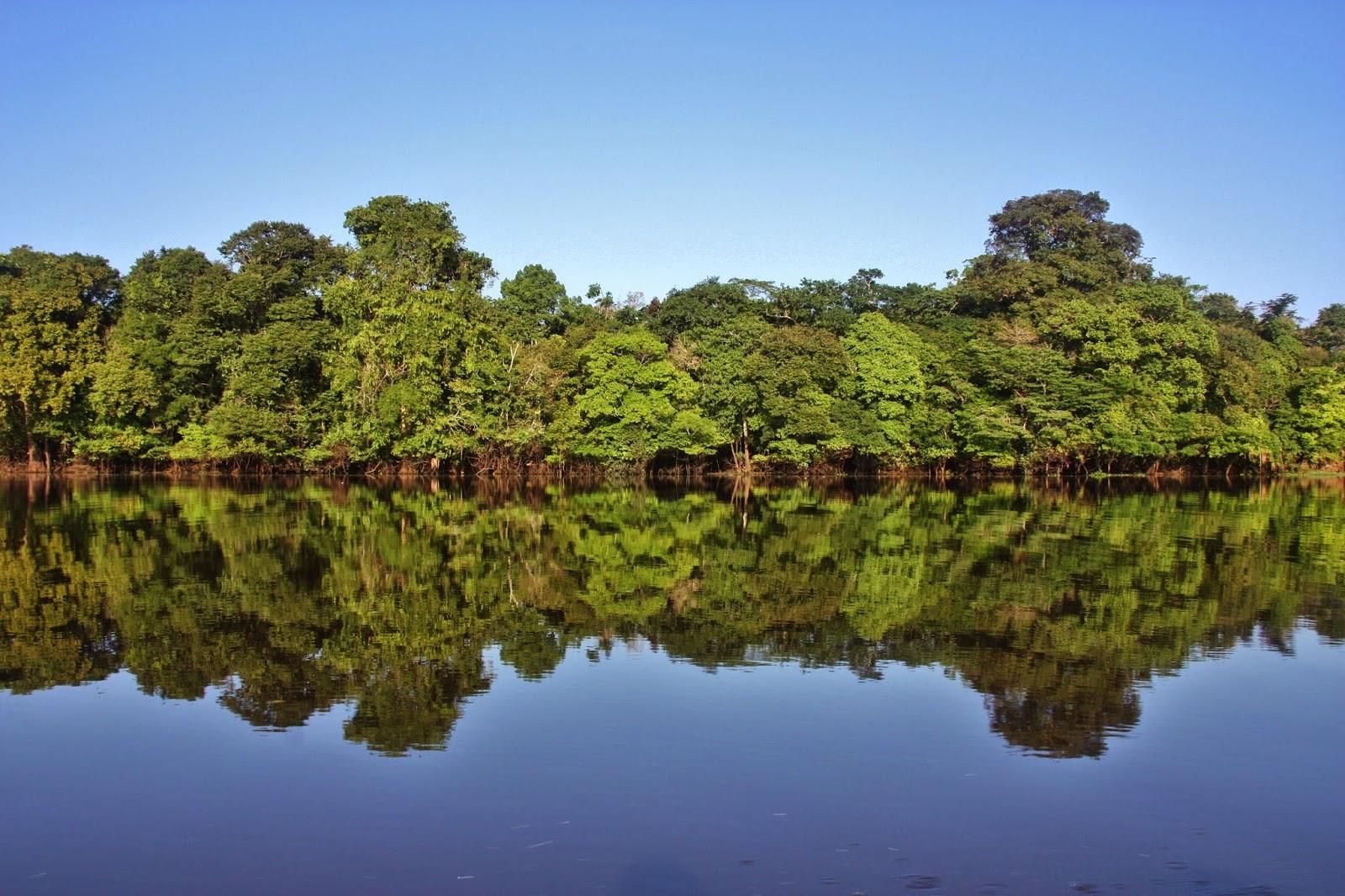 Selva amazônica refletida no Rio Japurá.