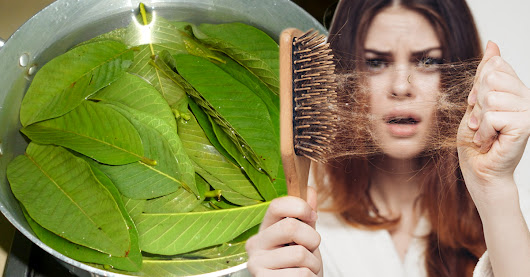 Boil These Leaves and Reverse Your Hair Loss in 7 Days