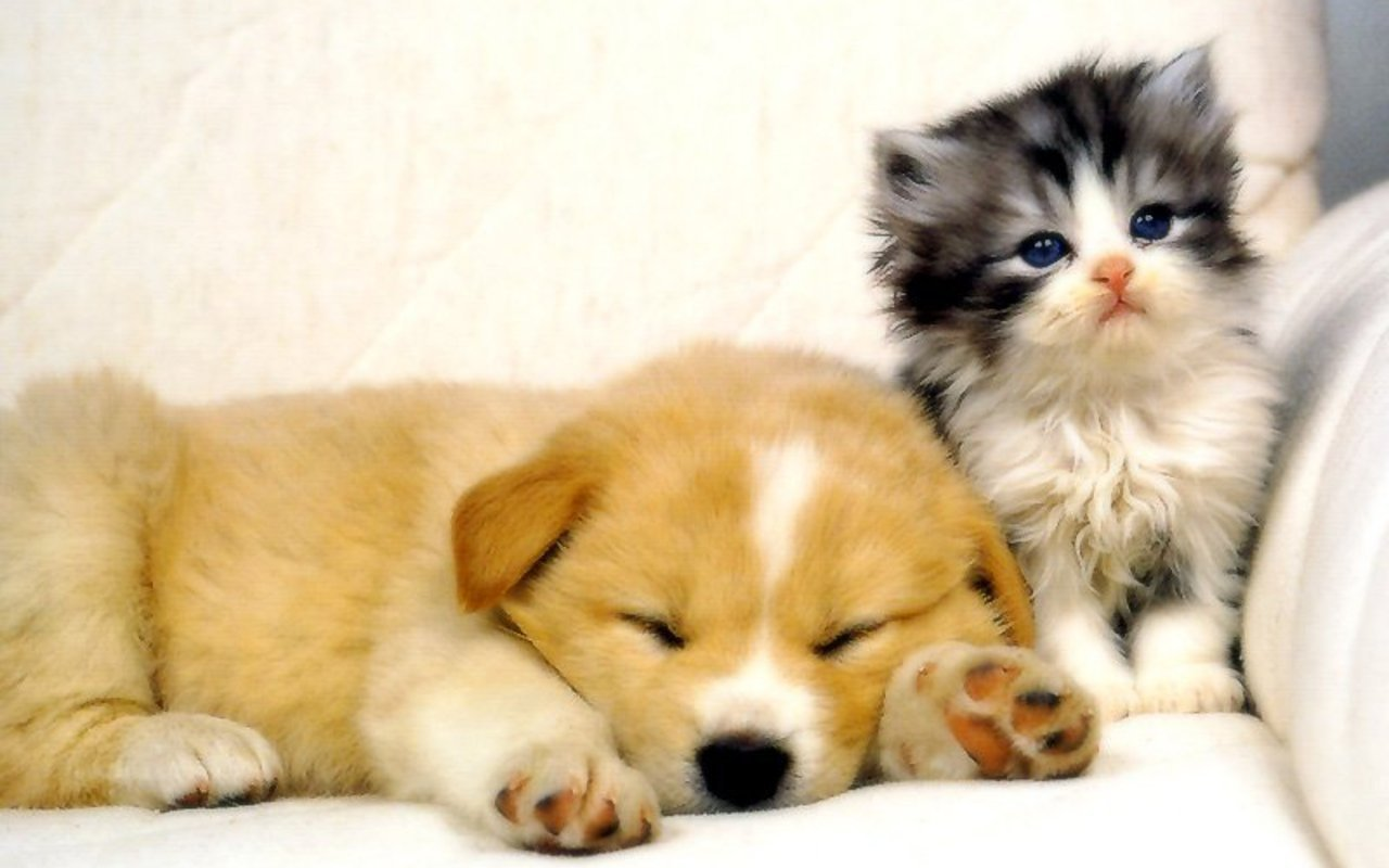 Cute Puppies And Kittens Wallpaper: My Top Collection: Dog And Cat Wallpapers