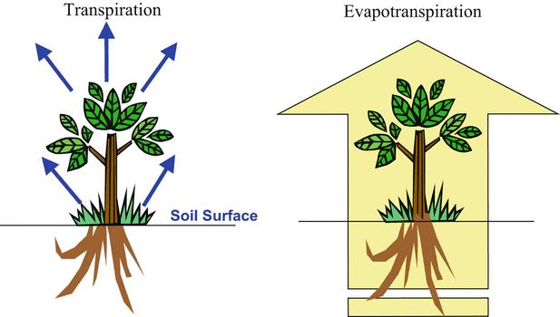 Proses Evaporasi, Transpirasi dan Evapotranspirasi