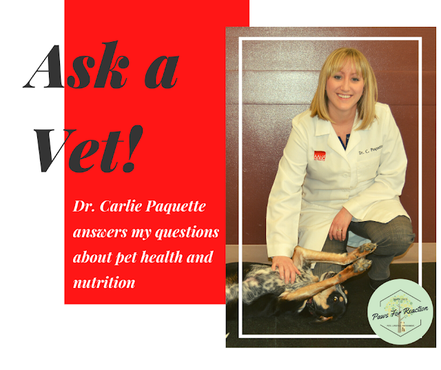 Doody calls: Ask a vet what to do with a coprophagia canine