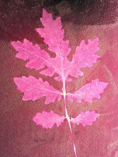 Solarfast prints_Sue Reno_Image 9