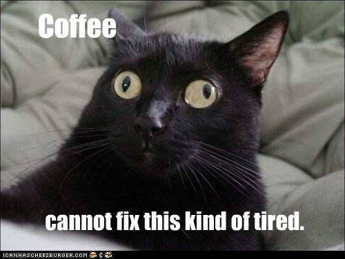 Funny Cat Pictures (LOLcats